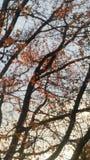 Solnedgång till och med trädet Royaltyfri Foto