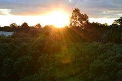 Solnedgång till och med trädet Arkivfoto