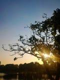 Solnedgång till och med trädet Royaltyfri Bild