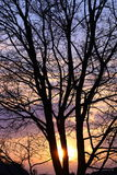 Solnedgång till och med tree Royaltyfri Bild