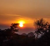 Solnedgång till och med trees Royaltyfria Bilder