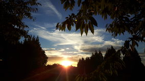 Solnedgång till och med trees Arkivfoto