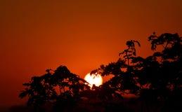 Solnedgång till och med treetopsna Arkivbilder
