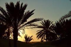 solnedgång tunisia Royaltyfria Bilder