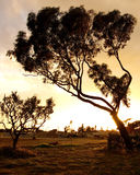 solnedgång tunisia Arkivbild