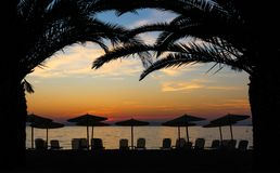 Solnedgång under palmträden fotografering för bildbyråer