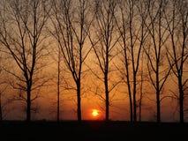Solnedgång utöver träden Royaltyfri Fotografi