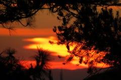 Solnedgång väck med vingen Arkivbild