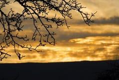 Solnedgångafton i Ukraina Royaltyfri Foto
