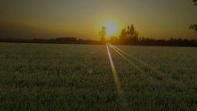 solnedgångar royaltyfria bilder
