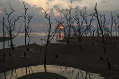 SolnedgångBako nationalpark, Borneo Arkivbilder