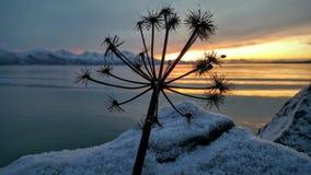 Solnedgångblomma Fotografering för Bildbyråer