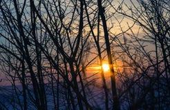 Solnedgångbuske Royaltyfri Foto