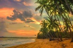 Solnedgången över kokosnöten gömma i handflatan Arkivfoto