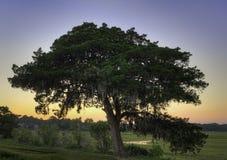 Solnedgången bor oaken arkivbilder
