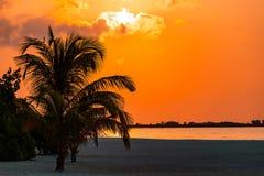 Solnedgången eller soluppgång med gömma i handflatan och skeppet i Maldivernaen, exotiska destinationer för ferie eller bröllopsr royaltyfri foto