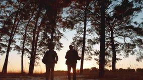 Solnedgången för konturn för två turistmän går att fotvandra i skogsolljuset grupp för lopploppturism av att gå för turister stock video