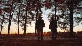 Solnedgången för konturn för två turistmän går att fotvandra i skogsolljuset grupp för lopploppturism av att gå för turister lager videofilmer