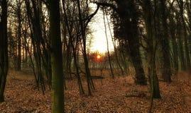 Solnedgången för skogbladträd färgar utmärkt banapaddagränden Royaltyfri Bild