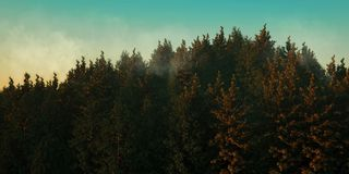 Solnedgången framför skogen vektor illustrationer