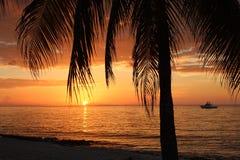 Solnedgången gömma i handflatan havet Royaltyfri Foto