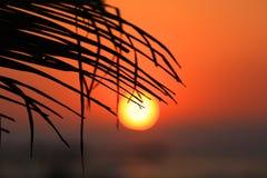 Solnedgången gömma i handflatan igenom frunch Royaltyfri Foto