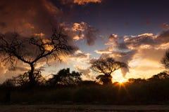 Afrikansk solnedgång. Royaltyfri Foto