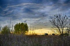 Solnedgången i naturliga Vacaresti parkerar, Bucharest, Rumänien Arkivfoto
