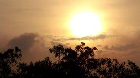Solnedgången i skymningtiden med himmelguling och orange färg över träden parkerar in stock video