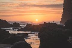 Solnedgången med fåglar vaggar på på stranden Arkivfoton