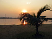 Solnedgången och palmträdet Eco parkerar Indien Fotografering för Bildbyråer