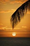 Solnedgången på den Waikiki stranden med gömma i handflatan filialen Royaltyfri Bild