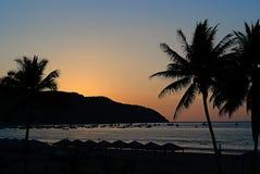 Solnedgången på en strand med gömma i handflatan fotografering för bildbyråer