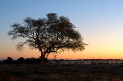 Solnedgången på waterholen på Okaukeujoen vilar lägret, Etosha Natio Arkivbild