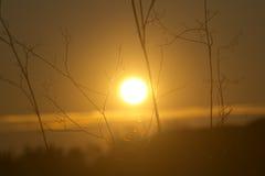 Solnedgången parkerar den gammala appiaen Fotografering för Bildbyråer