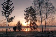 Solnedgången reflekterar på sjön som sett från kust bak träd Arkivbild
