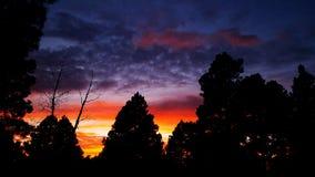 Solnedgången sörjer igenom och aspar royaltyfria bilder