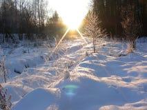 Solnedgången tänder upp nya snö och växter Royaltyfria Bilder