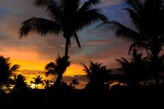 Solnedgången till och med gömma i handflatan fiji Royaltyfria Foton