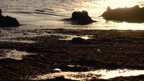 Solnedgången vid havet, vinden upphetsar vattnet, en ljus bris arkivfilmer