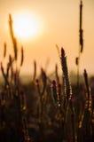 Solnedgångfält royaltyfria foton