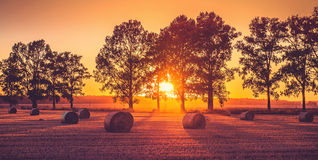 Solnedgångfält