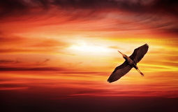 Solnedgångfågel Royaltyfri Fotografi
