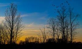 Solnedgångfåglar Arkivbilder
