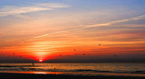 Solnedgångfiskare Royaltyfri Bild