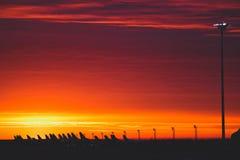 Solnedgångflygskuggor Royaltyfri Foto