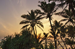 SolnedgångfotoSri Lanka strand Royaltyfria Foton