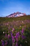 Solnedgångglöd, Mt.-huv, Oregon Fotografering för Bildbyråer