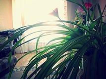 Solnedgånghem, skönhet Royaltyfria Bilder