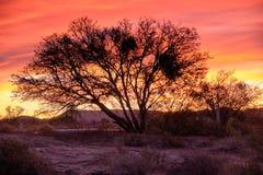 Solnedgånghimmel i lös stor Karoo arkivbild